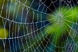 dew on a web